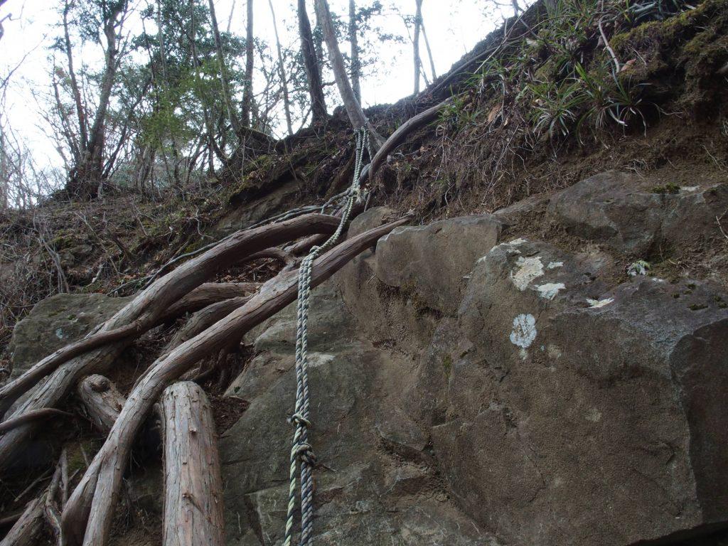 木の根をつかんで