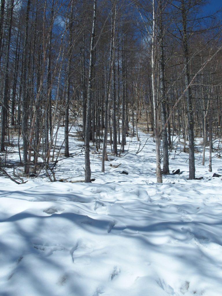 雪景色に日が差して