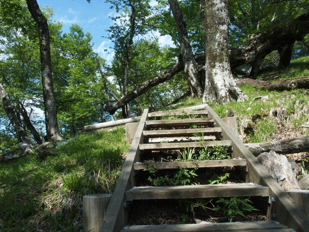 丹沢らしい木の階段