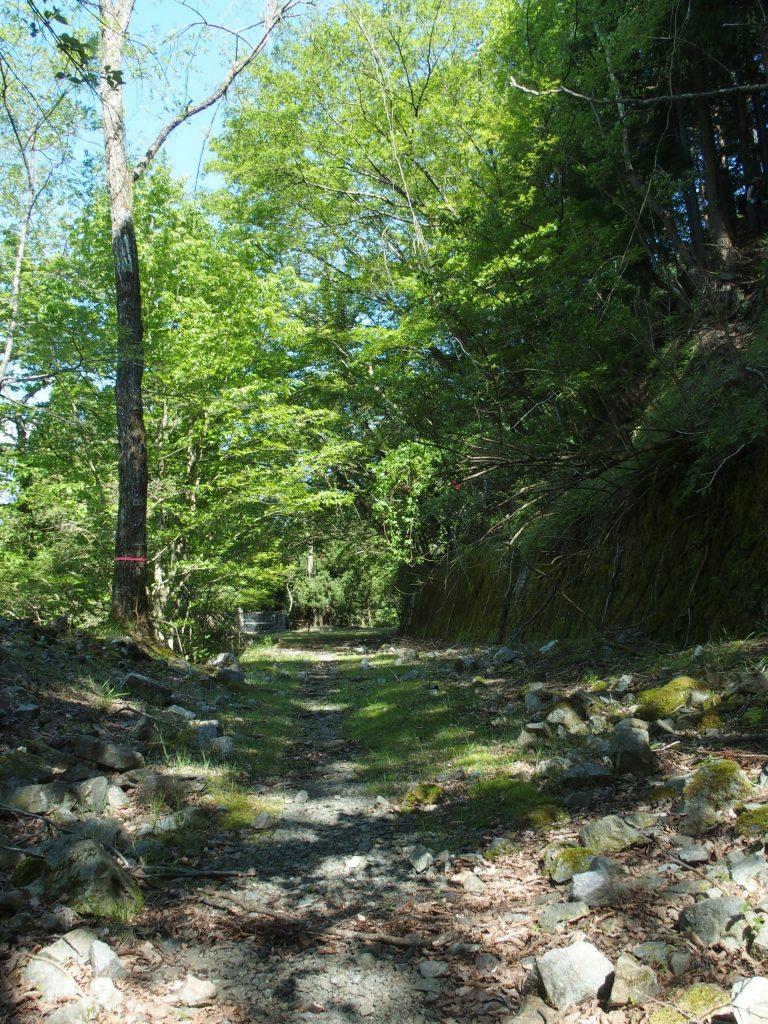 味わい深い林道